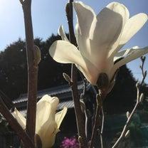 咲きました!の記事に添付されている画像