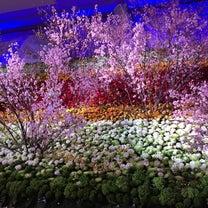 オンリーワンの花祭壇‼️の記事に添付されている画像