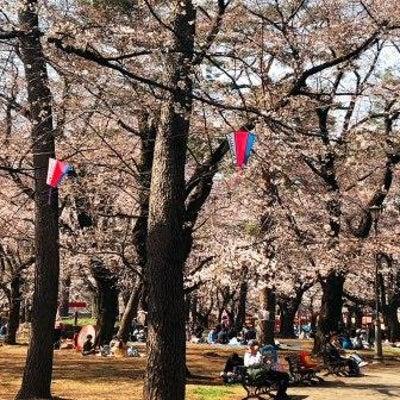 大宮公園の桜&「地球の未来を考える」3月30日はアースアワーの記事に添付されている画像