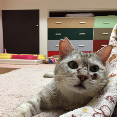 さばぞう無事保護・脱走猫の捜し方・交通事故に遭った猫を保護しています。の記事に添付されている画像