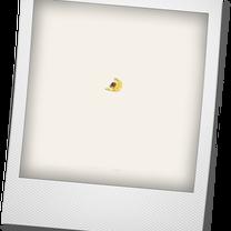 何か黄色い物・・・。の記事に添付されている画像