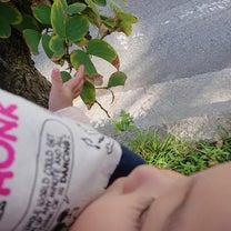 散歩道 ☆の記事に添付されている画像