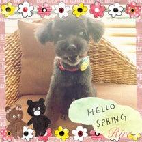 お花見にもぴったり春の養生食材☆彡~ペットと楽しむ食養生~渋谷区の心と体の動物病の記事に添付されている画像