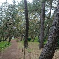 野宿 in千本松公園 沼津の記事に添付されている画像