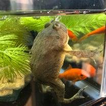 続カエルの餌やりとケース掃除の記事に添付されている画像