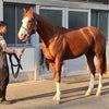 地方所属馬の休養についての画像