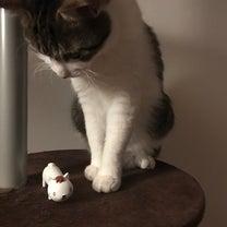 2019年3月26日 邪悪なハンコ屋しにものぐるい ネコ型ケース♪の記事に添付されている画像