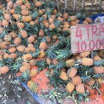 【ベトナム】ど田舎のガタガタ道をローカルバスで走る!一面のパイナップル畑を見ながの記事に添付されている画像