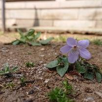 春のお誘い(о´∀`о)の記事に添付されている画像