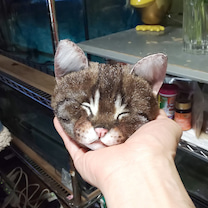 『    でっかい寝ん猫  顔だけ~~っ』の記事に添付されている画像