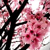 0327-今日がお花見日和らしいよ。平日じゃねぇか、。の記事に添付されている画像