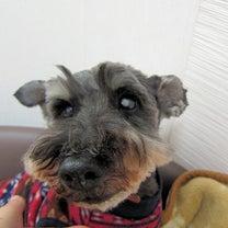 保護犬【ぜん】ご支援に感謝の記事に添付されている画像