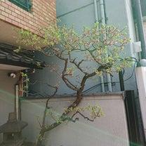 この前の梅は散りました♪♪♪の記事に添付されている画像