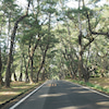 五島列島 小値賀島の自然のワイルドなパワースポット!五両ダキの画像