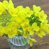 【六車奈々、会心の一撃! ~お花を摘みにきたの~】の画像