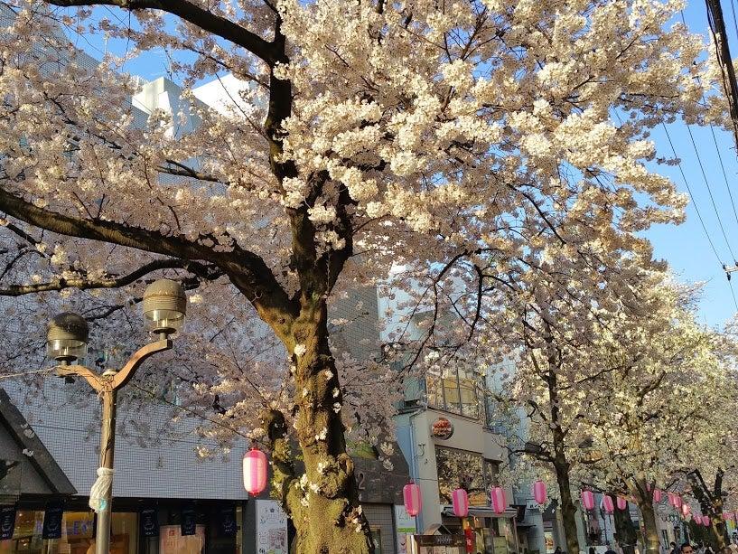 ありそうでなかった!『フレッシュネスバーガー』自由が丘店が4月1日OPEN!