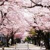 お花見バーベキューにはこれ‼青森県産ホタテ☆の画像
