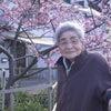 河津桜の下をお散歩 in 三番館2階の画像
