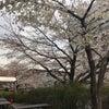 春めいてきましたの画像