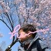 桜と保育園入園準備の画像