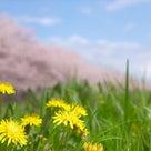 春は悲しい時もあるけど新たなスタートでもあるよねの記事より