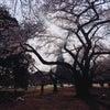 こんにちは【山科のブログ♪】の画像