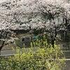 浅草と桜と…❣️『開運❣️魂磨きのお茶会の開催日決定❣️の画像