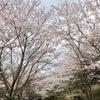 仲哀公園千本桜街道まつり♪の画像
