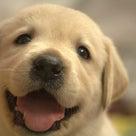 聴導犬の記事より
