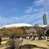 東京の桜その6〜小石川後楽園の画像