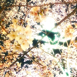 画像 レムリアンヒーリング®ティーチャー更新中です夜は六本木ミッドタウンの夜桜満喫 の記事より 2つ目
