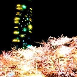 画像 レムリアンヒーリング®ティーチャー更新中です夜は六本木ミッドタウンの夜桜満喫 の記事より 3つ目