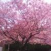 4月1日ドキドキワクワクの画像