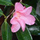 3月28日の散歩と家の花です。の記事より