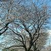 春です☆の画像