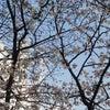 桜の満開と新年号「令和」 そしてメンテナンスの画像