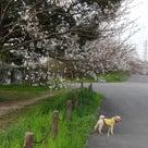 3月29日の散歩ですよ。の記事より