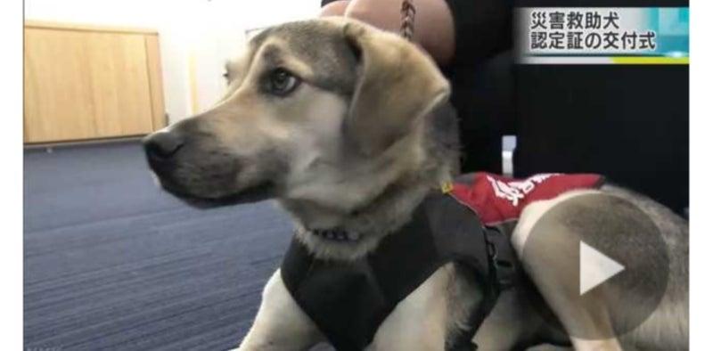 保護 犬 徳島 リンリン (犬)