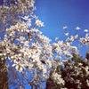 この春のフラワーセラピーメニューは心の免疫力をアップします♡の画像