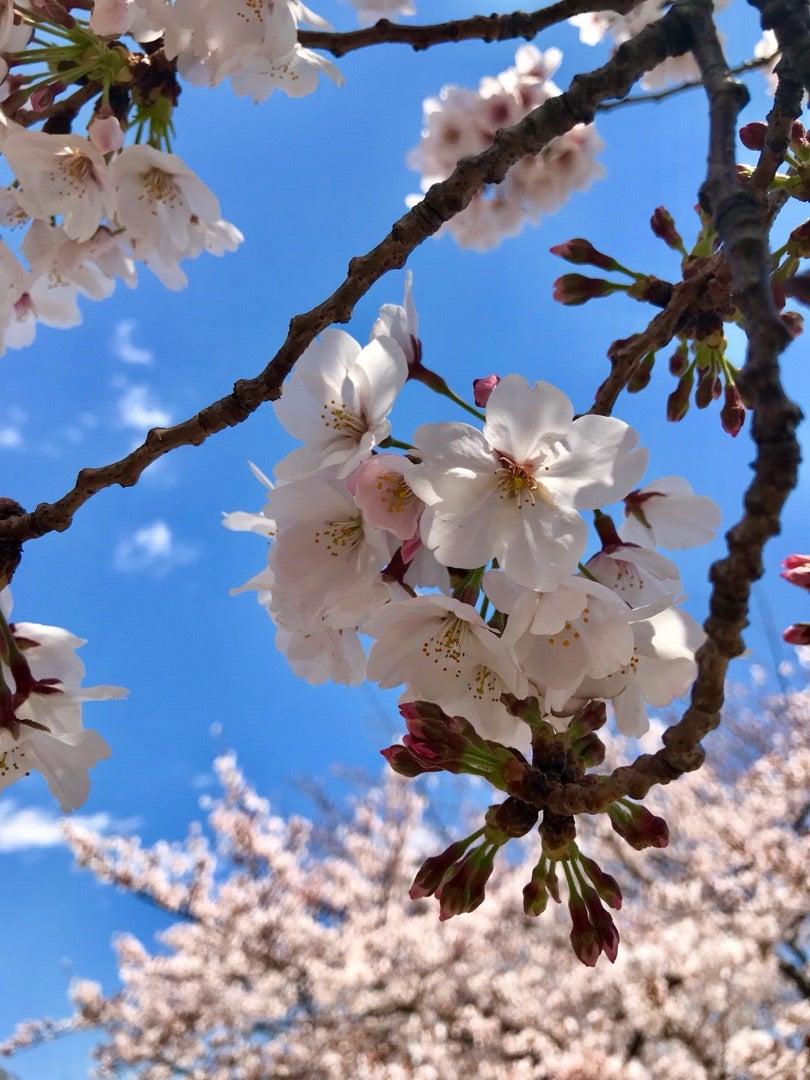 桜の季節に思う。の記事より