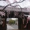 妙覚寺って意外と良いお寺ですの画像