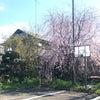 ♡春の心地♡の画像
