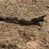 田んぼに埋まった木の画像