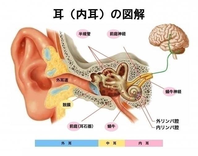 蝸牛 型 メニエール 病 めまい たかはし耳鼻科 - 耳鼻咽喉科