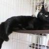 猫ちゃんたちと暮らしはじめて1ヶ月半...の画像