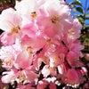 [レポ]4月3日春のセッションフェア♡開催しましたの画像
