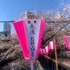 目黒川でお花見♡SHINee発見!!の画像