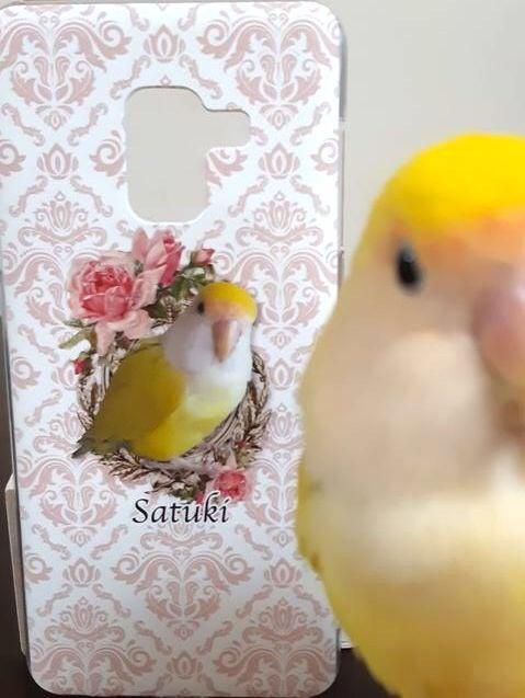 小桜インコのサツキちゃん