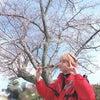 西岡健吾きゅん(21)がお花見に行った結果...の画像