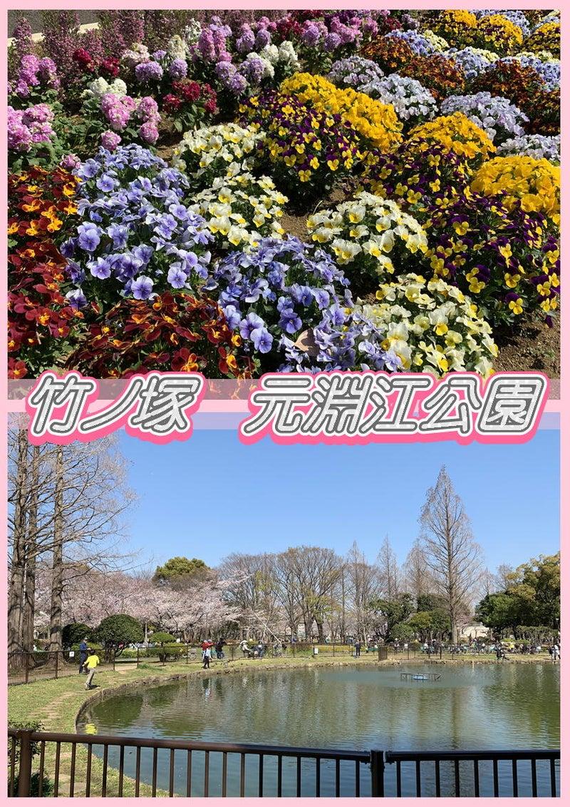 とんでんの塩辛☆桜を観に竹ノ塚の元淵江公園に行って来ました!タイ古式&足つぼ&オイルマッサージ2
